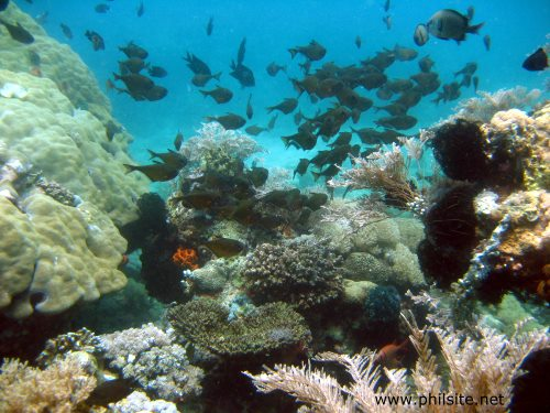 Picture of a coral reef teeming with black-margin bulls eye fish in Palawan